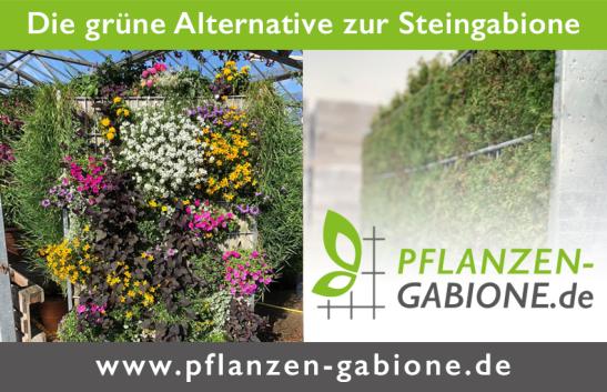 www.pflanzen-gabione.de